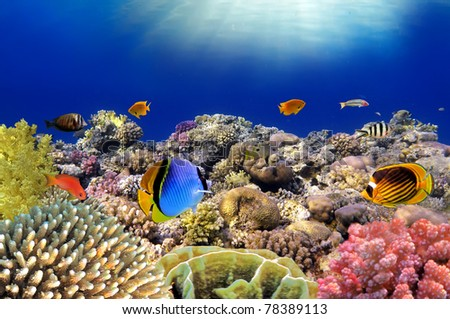 Underwater world. Coral fishes of Red sea. Egypt. - stock photo