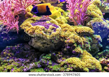 Underwater World, corals and beautiful fish. Aquarium. Wonderful and beautiful underwater world with corals and tropical fish. Beautiful fishes in water tank. Close up tropical fish underwater. - stock photo