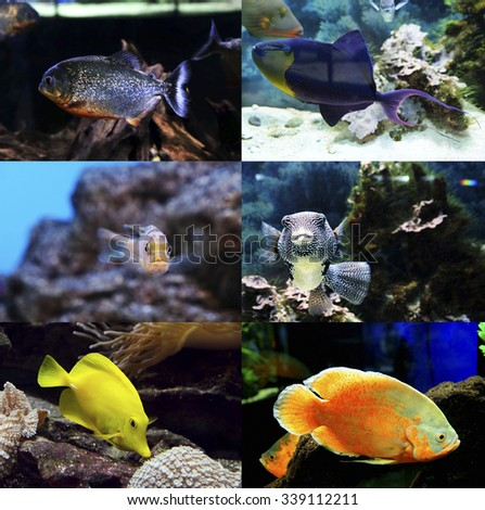 Underwater world - exotic fishes in an aquarium