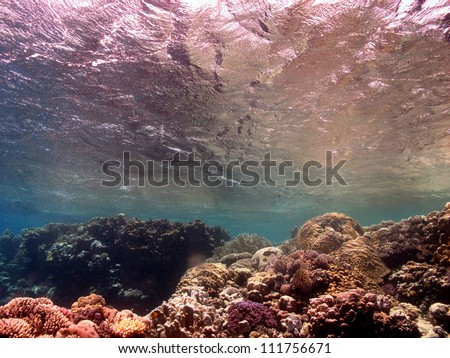 Underwater world - Red sea - stock photo