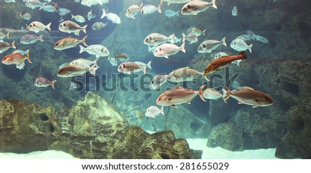 Underwater world, shoal of many marine shiny silver fishes