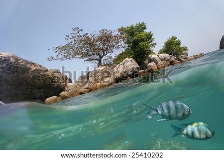 Underwater world with two fishes and coast - stock photo