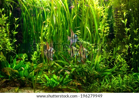 undewater green alga, aquatic plants and fishes. Tropical underwater reef and plants in ocean - stock photo