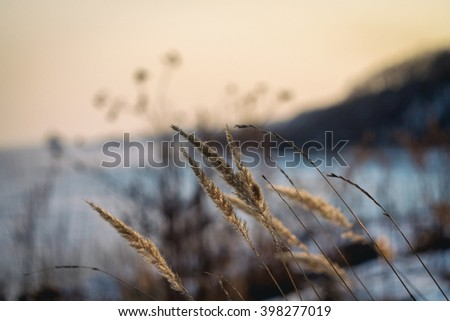unfocused field of grass during sunset ,vintage tone, sea behind, bokeh - stock photo