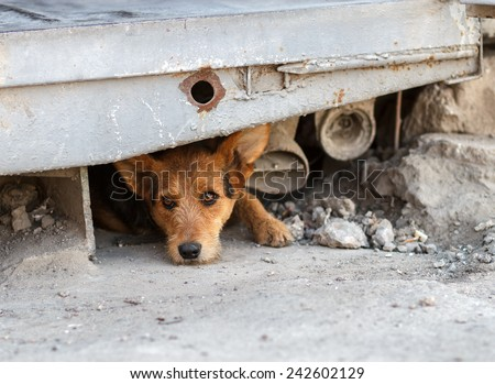 Unhappy homeless dog that lives underground - stock photo