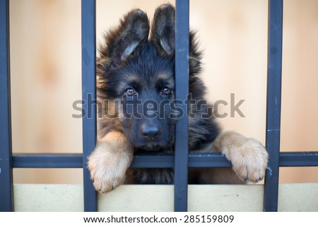 Unhappy puppy behind bars in shelter - stock photo