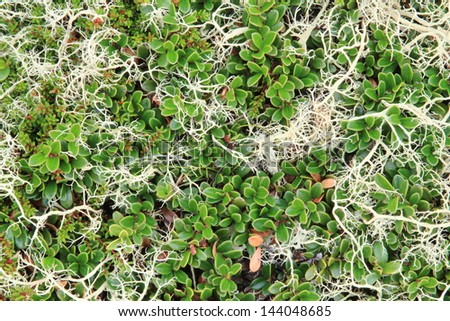unicellular algae and mosses, lichens used as biological indicators for health and cosmetics Italy - stock photo