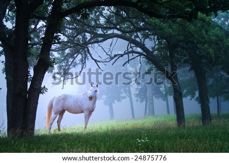 Unicorn standing in a blue mystical foggy woods. - stock photo