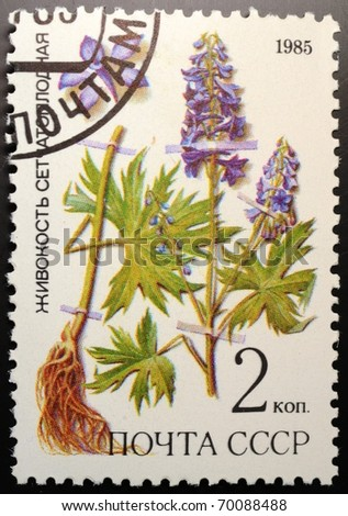 UNION OF SOVIET SOCIALIST REPUBLICS - CIRCA 1985: a 2 kopec stamp from the USSR (Scott 2008 catalog number 5379) shows image of Dictyocaryum, of the medicinal plants from Siberia series, circa 1985 - stock photo