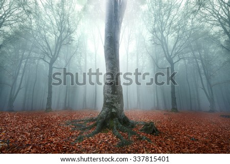 Unique fairy tale tree in foggy autumn day inside the forest - stock photo