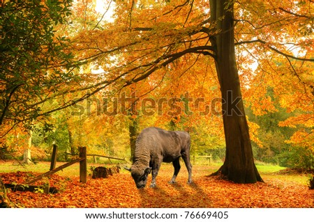 Unique image of European bison buffalo in Autumn Fall scene