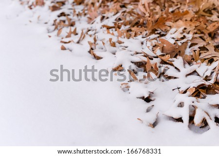 Unique view of fallen leafs and snow side by side during winter time