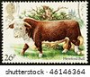 UNITED KINGDOM - CIRCA 1984: A British Used Postage Stamp showing a Hereford Bull, circa 1984 - stock photo