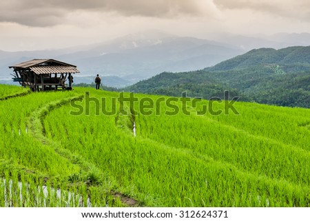 Unknown Photographer take a photo of Green Terraced Fields with Cloudy - stock photo