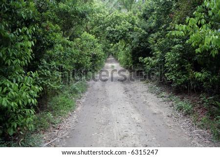 Unpaved Road - An infinite dirt road through dense vegetation. - stock photo