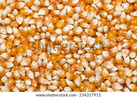 unpopped popcorn kernels background texture image - stock photo