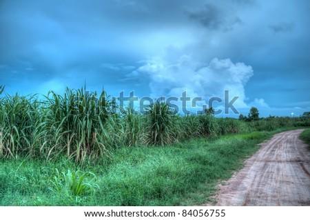 unproductive sugarcane plantation (high dynamic range) - stock photo