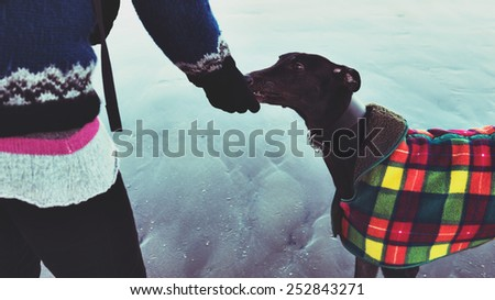 Unrecognisable hipster girl feeding her dog, Greyhound, on the beach. Colorised filter effect image. - stock photo