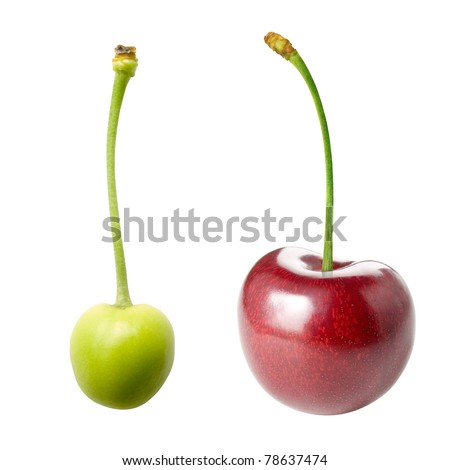 Unripe and ripe cherry isolated on white background. - stock photo