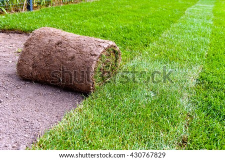 unrolling new lawn roll