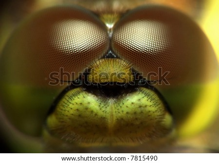 unshaven pilot, extreme closeup of dragonfly - stock photo