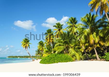 Untouched tropical Caribbean beach - stock photo