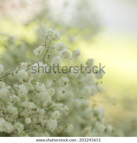 Unusual Tender white flowers background - stock photo