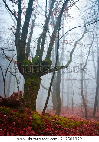 Unusual tree in the misty autumn forest  - stock photo