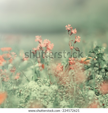 unusual vintage retro pink meadow flowers  - stock photo