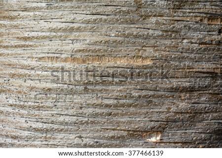 Unusual wooden texture, pattern, background (trunk of dracaena draco - dragon tree) - stock photo