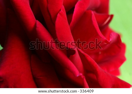 up close and personal macro shot of a beautiful red rose - stock photo