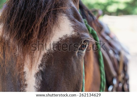 Up Close and Personal with a Quarter Horse - stock photo