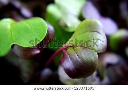 up close photo of micro greens - stock photo