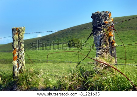 Upcountry fence on the Big Island of Hawaii is overgrown with lichen and mosses.  Barbed wire fences surround the Kohala Mountain ranch land. - stock photo