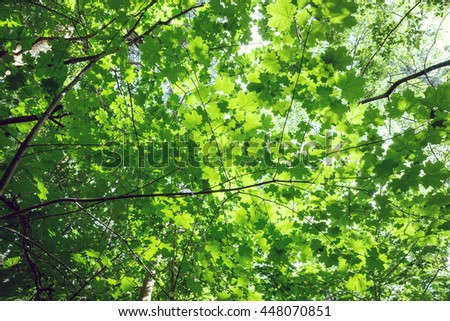 upper branches of tree - stock photo