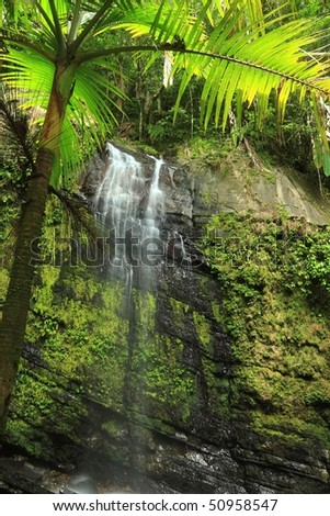 Upper Juan Diego Falls seen below a palm tree in the El Yunque rainforest in the Caribbean National Forest, Puerto Rico - stock photo