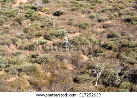 Upper view of winter savanna woodlands with dry and green trees from the top of Waterberg Plateau National Park, Namibia