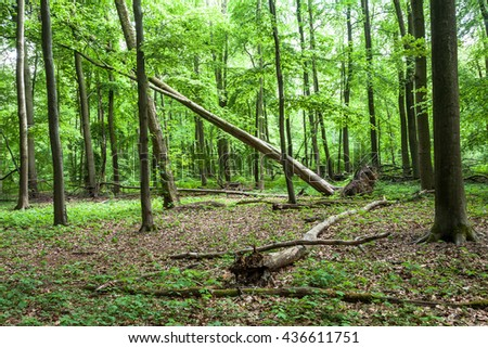 Uprooted Tree In A Forest