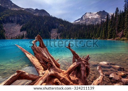 Uprooted tree, turquoise glacial lake, pine trees, and snow-capped mountains - stock photo