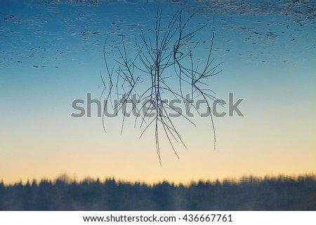 Upside-down reflection of branches sticking out of calm water and gradient sky - stock photo