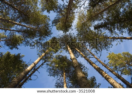 upward angle in a forest - stock photo