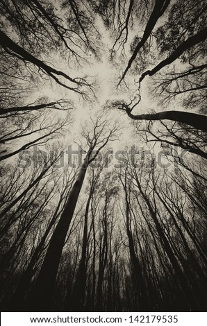 upward view in a dark spooky forest sepia - stock photo