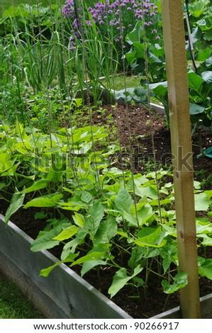 Urban Garden - stock photo