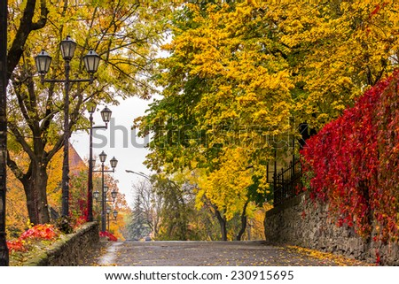 urban landscape. street of the old town is wet after rain, with yellowed trees, red ivy on the wall and street lamps - stock photo