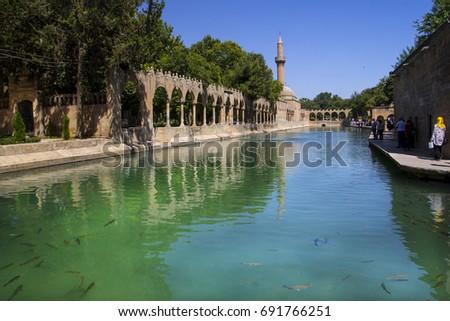stock-photo-urfa-holy-lake-with-sacred-f