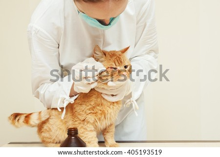 urgent care.Veterinary performing auscultation a sick red kitten in the clinic. - stock photo