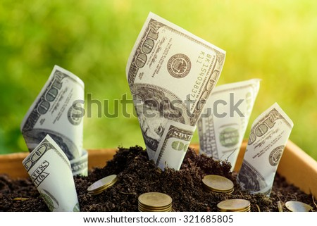 Us dollars and gold coin grow from the ground Box ; investment concept - stock photo