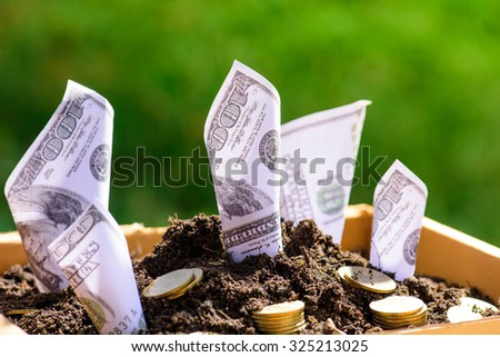 Us dollars grow from the ground Box ; investment concept - stock photo