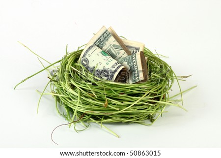 US dollars in a green bird's nest