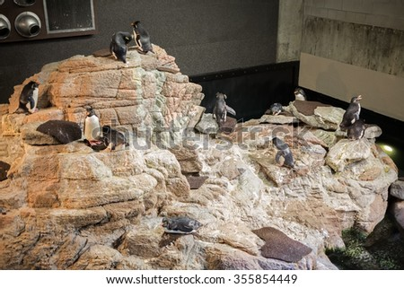 USA, BOSTON -?? 06 SEP, 2014: Group of penguins are standing on the island at the New England Aquarium.